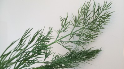 Facts of Food – Dill